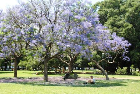 Buenos Aires im Frühling 3
