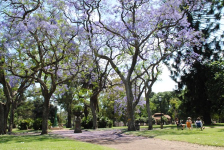 Buenos Aires im Frühling 5
