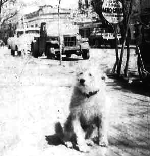 Der Hund Fernando